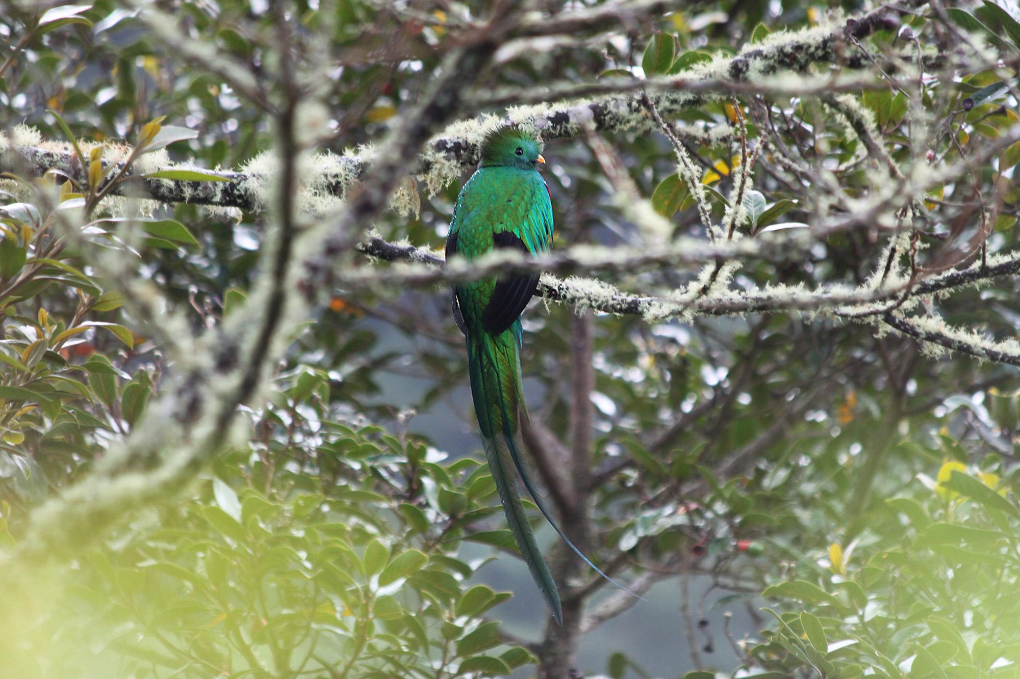 Onze favoriete nationale parken van Costa Rica - Parque Nacional Los Quetzales