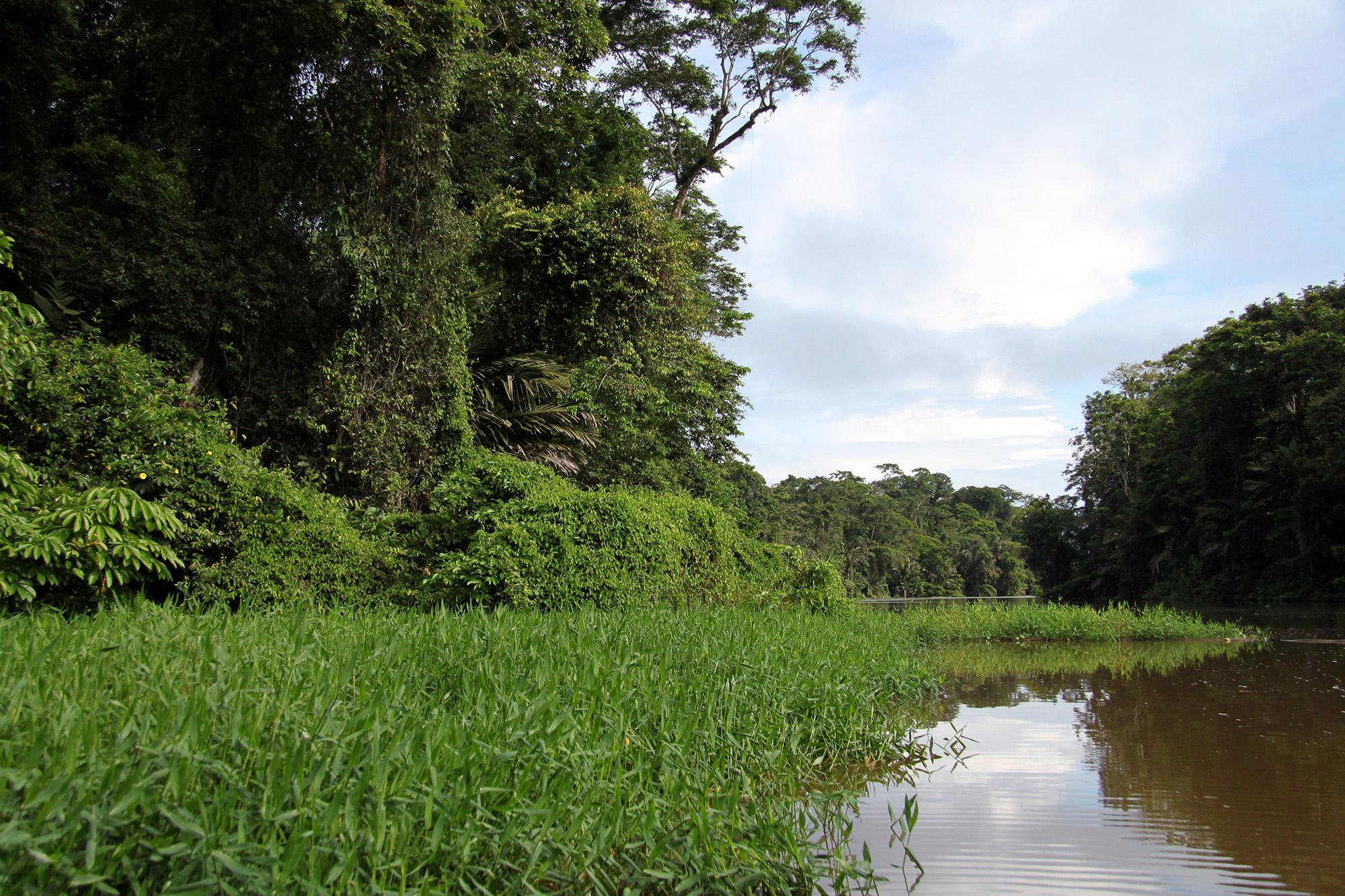 Onze favoriete nationale parken van Costa Rica - Parque Nacional Tortuguero