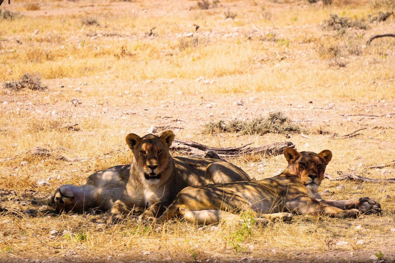 De volgers van Reizen & Reistips: Iris - Namibië