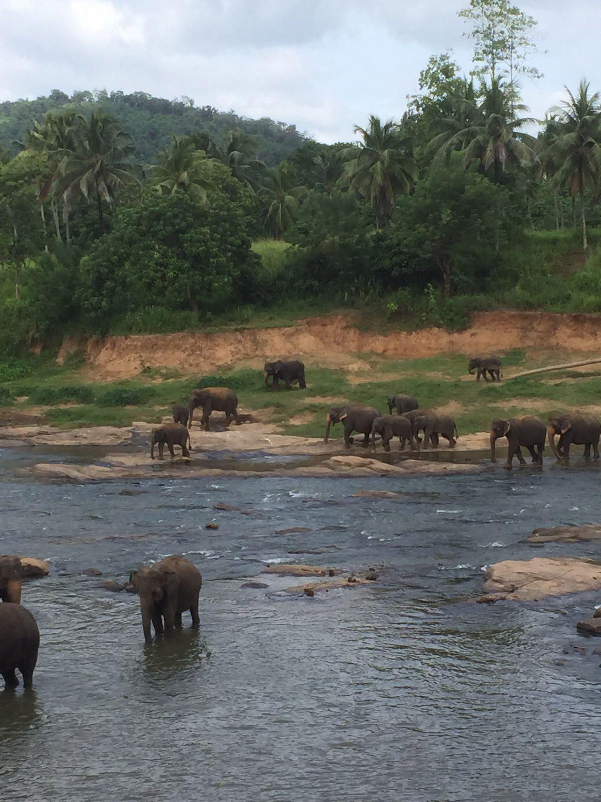 De volgers van Reizen & Reistips: Iris - Sri Lanka