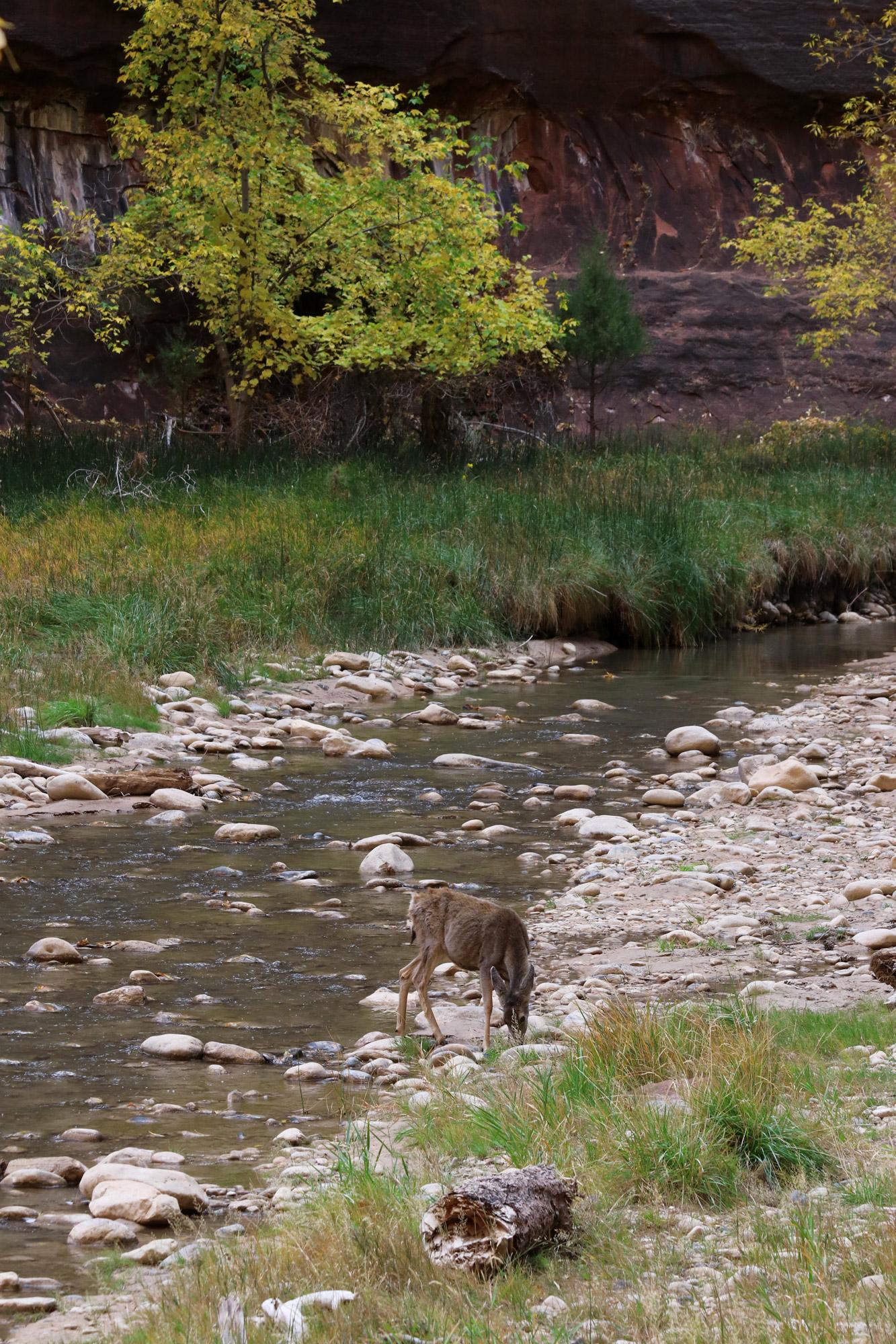 Amerika dag 15 - Zion National Park - Riverside Walk