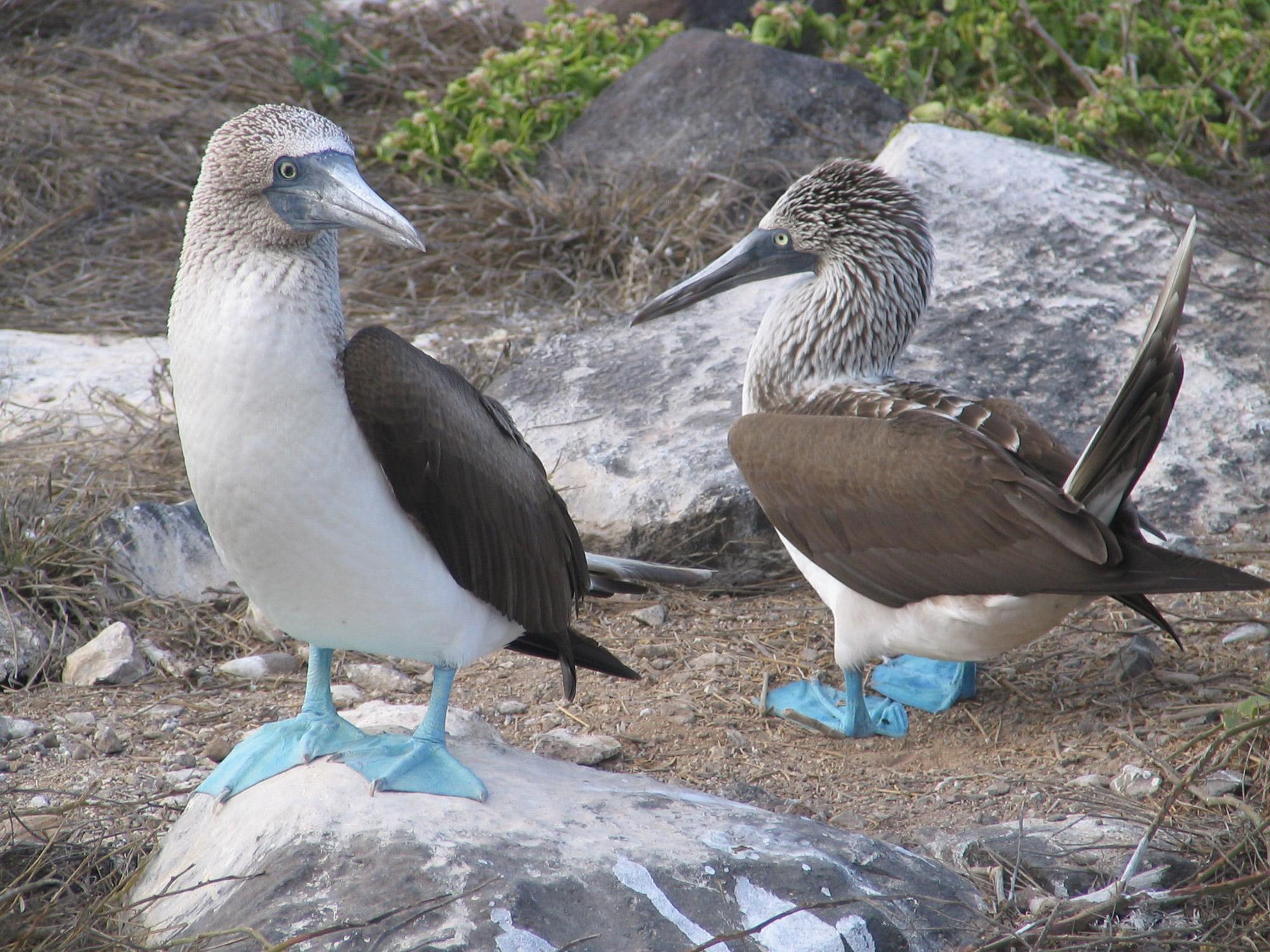 De volgers van Reizen & Reistips: Eric en Claudia - Jan van Genten op Galapagos Eilanden
