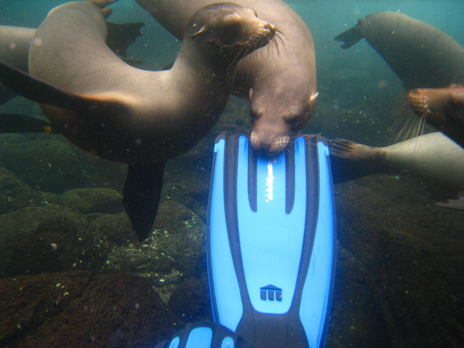 De volgers van Reizen & Reistips: Eric en Claudia - Snorkelen met zeeleeuwen op de Galapagos Eilanden