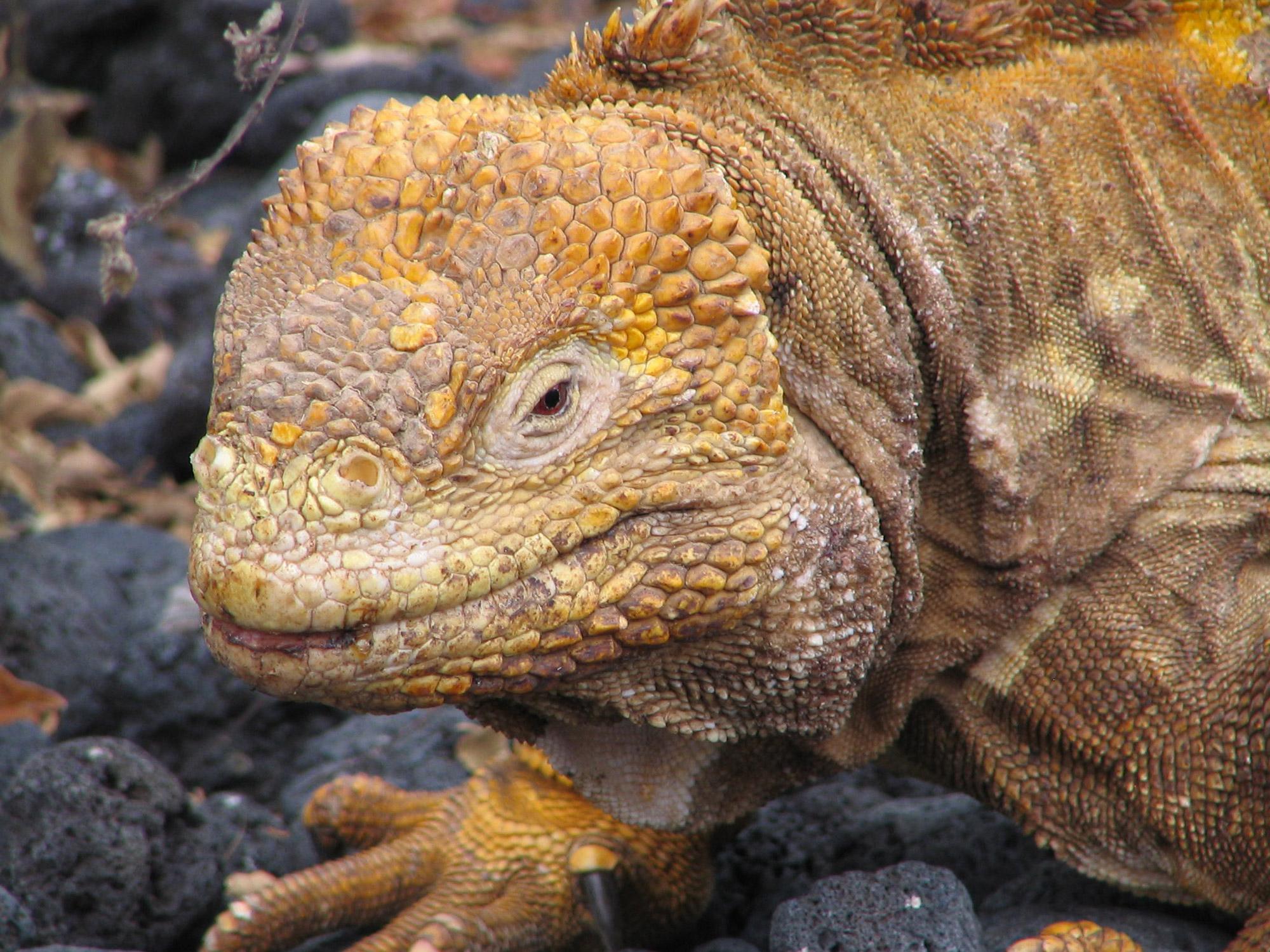 De volgers van Reizen & Reistips: Eric en Claudia - Zeeleguaan op Galapagos Eilanden