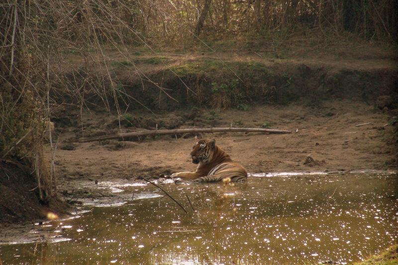 Op mijn wishlist: tijgers spotten in India