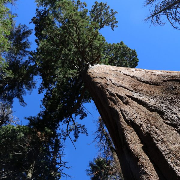 Sequoia National Park - Californië - Verenigde Staten