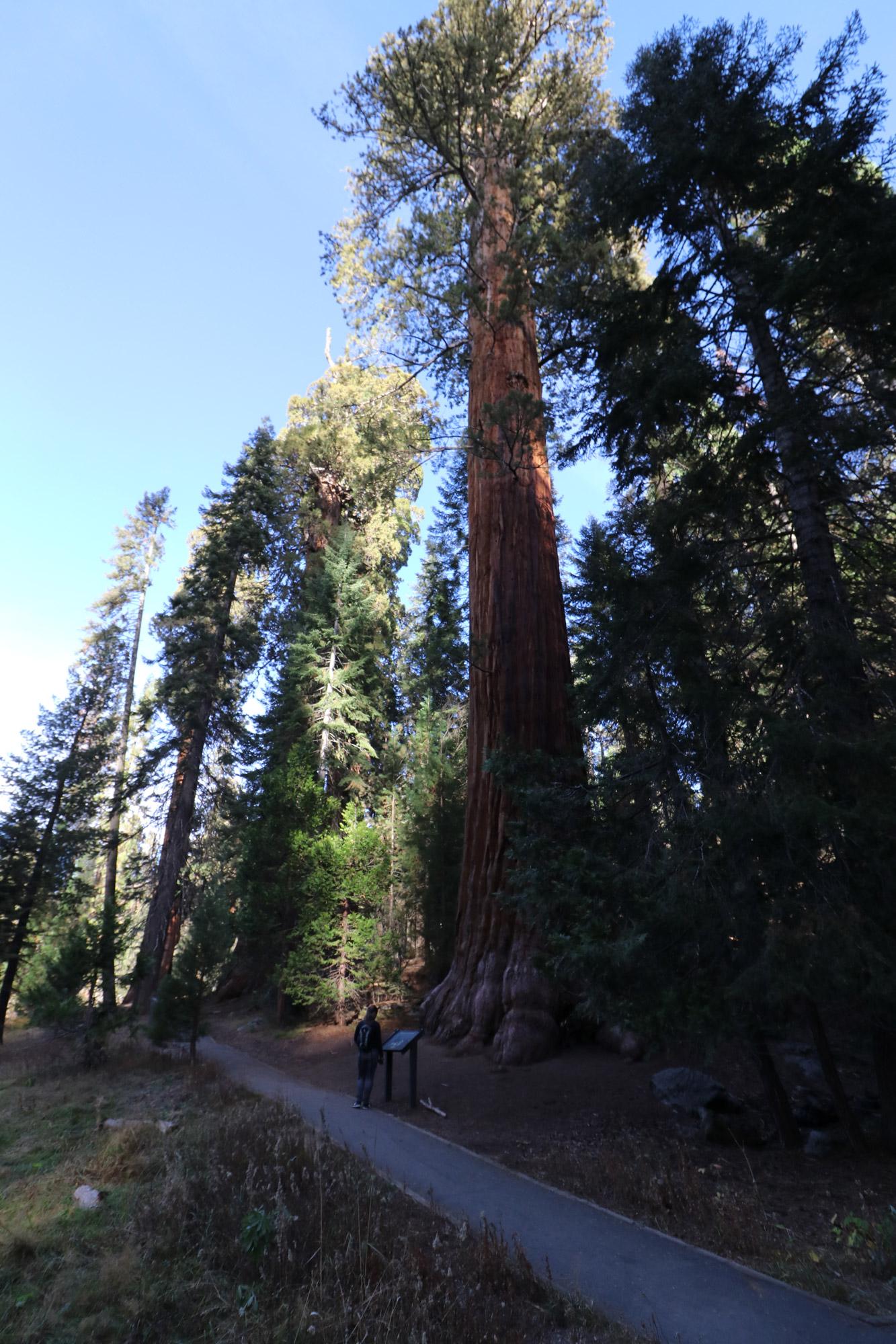 Amerika dag 19 - Sequoia National Park