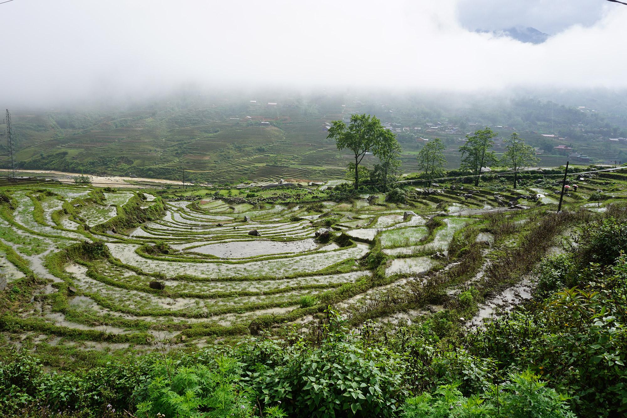 Djura - Sapa in Vietnam