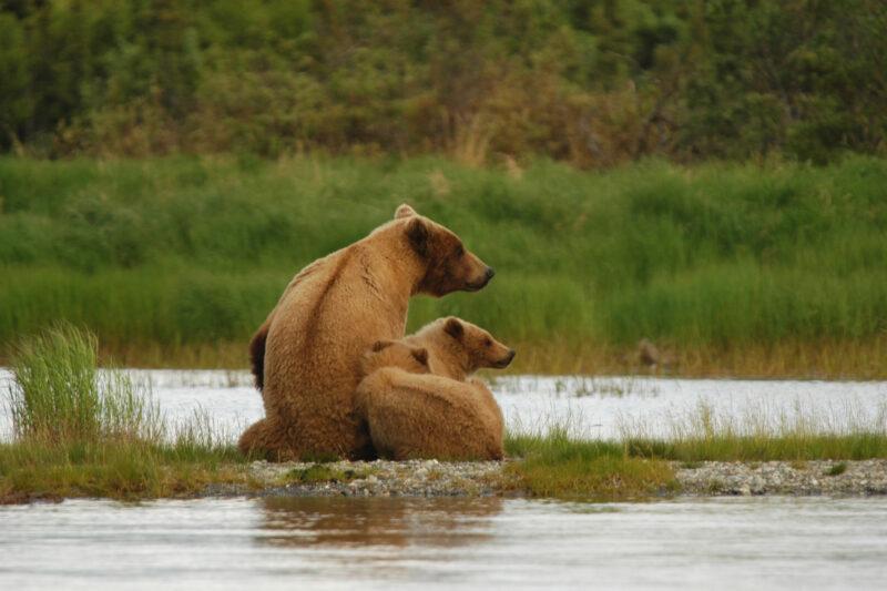 Op mijn wishlist: Beren spotten in Alaska