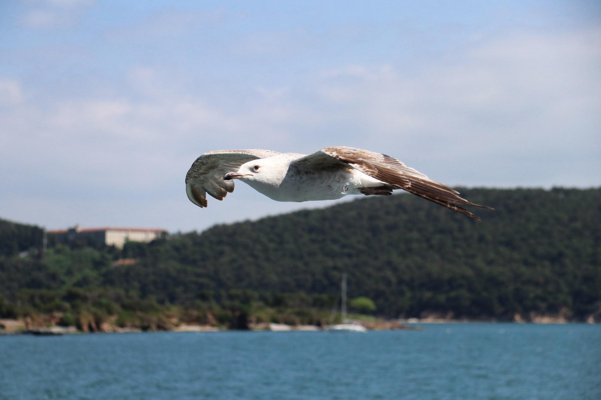 Stedentrip Istanbul - Een meeuw vliegt mee