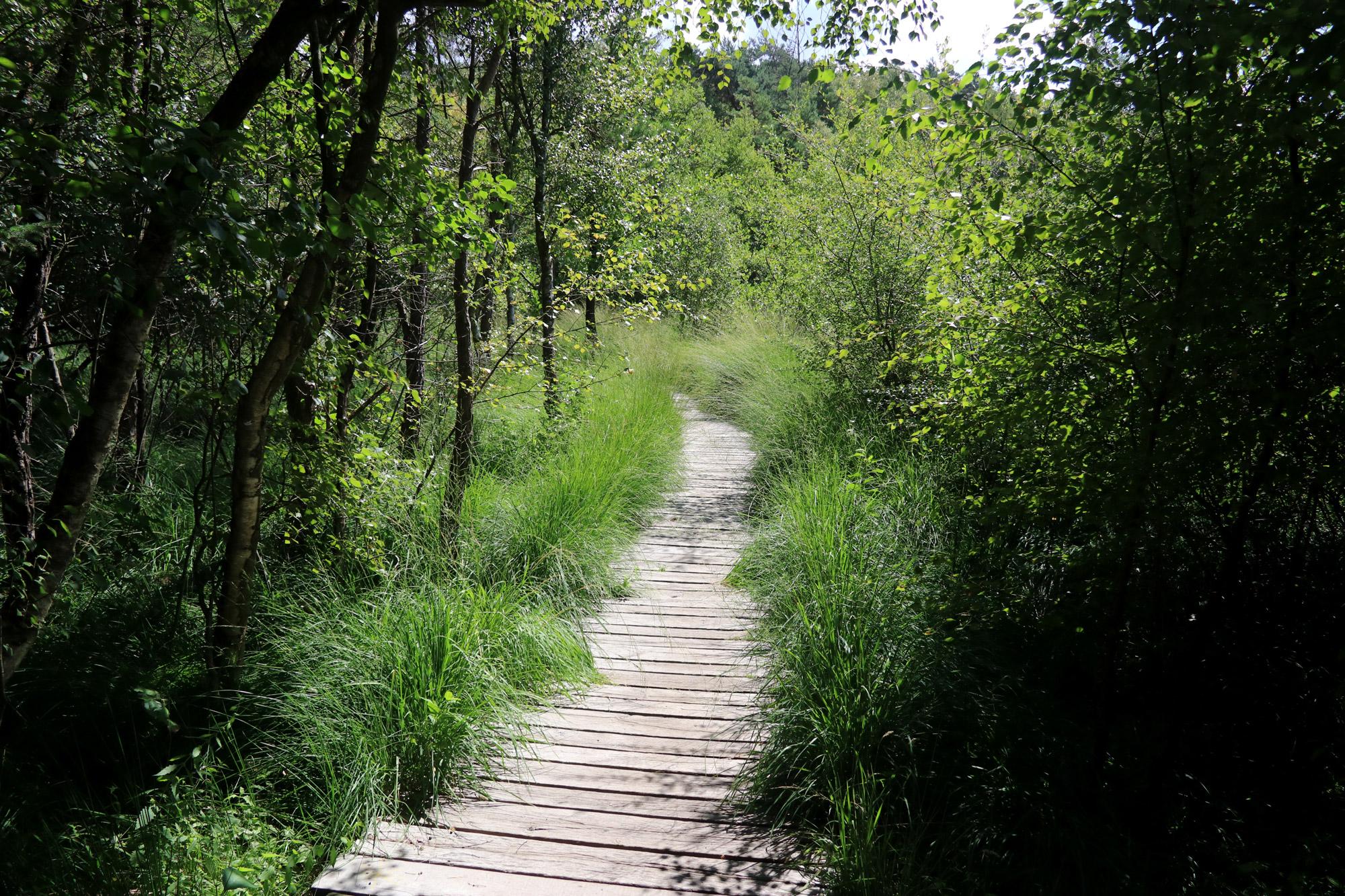 Wandeling: Birgeler Urwald in Duitsland