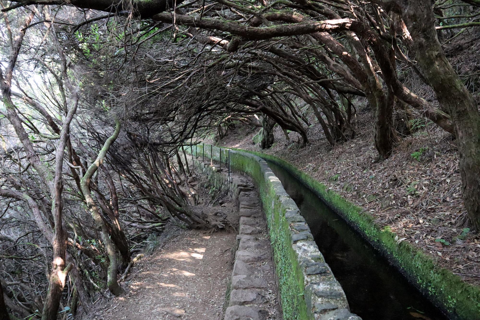 10x doen op Madeira - maak een levada wandeling