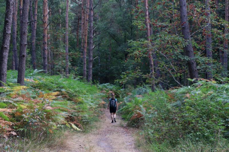 Foto van de maand: Augustus 2018 - Birgeler Urwald - Duitsland