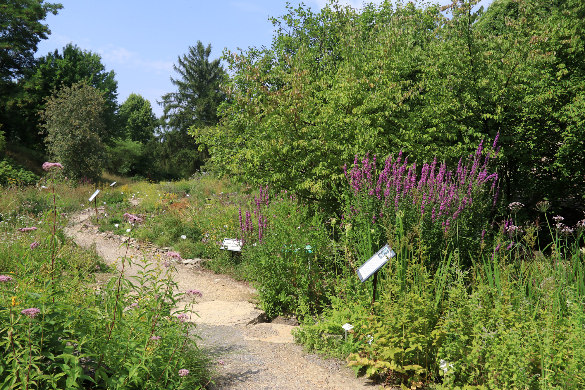 Stedentrip Osnabrück - Botanische tuin