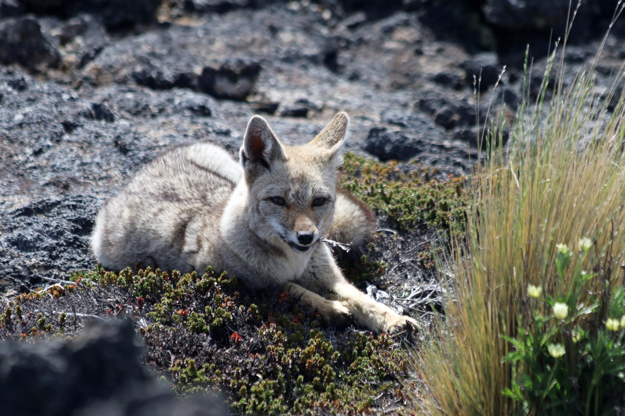 Patagonië - Parque Nacional Pali Aike