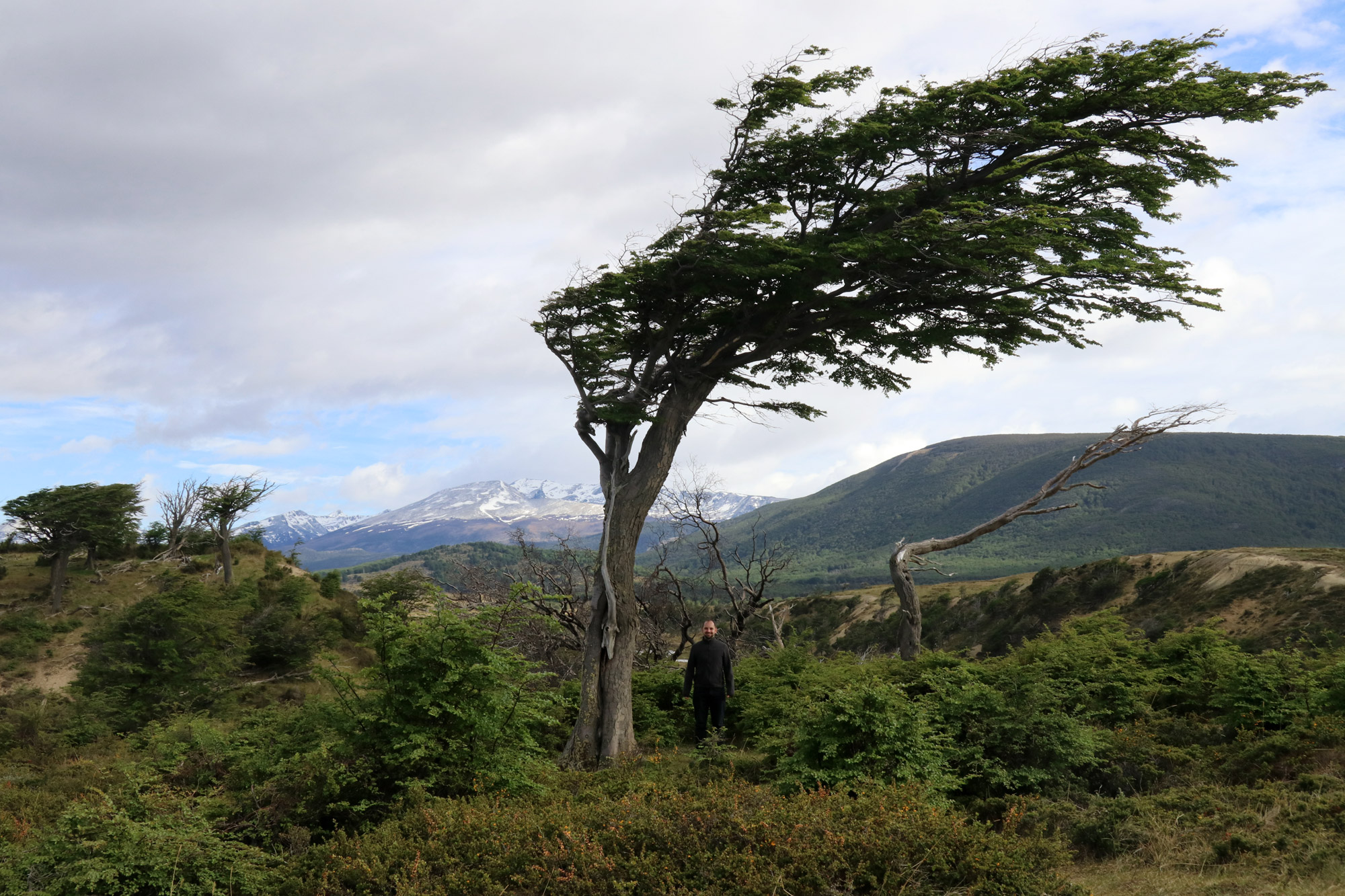 Patagonië - Vuurland - Bomen