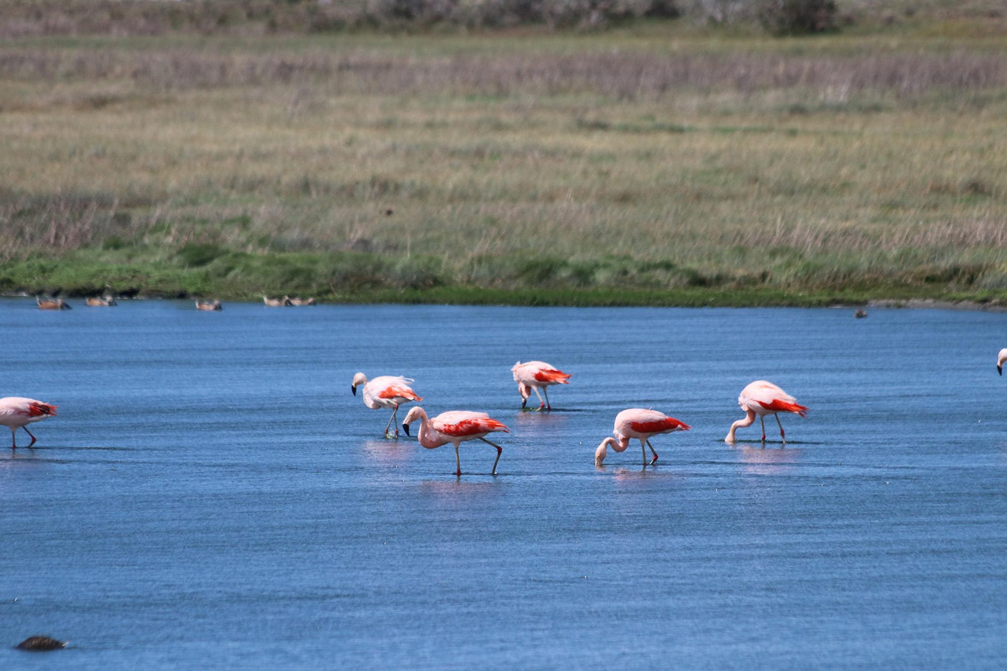 Reisverslag Patagonië - Laguna Nimez in El Calafate