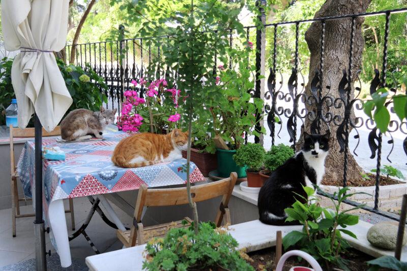 De straatkatten van Istanboel - Turkije