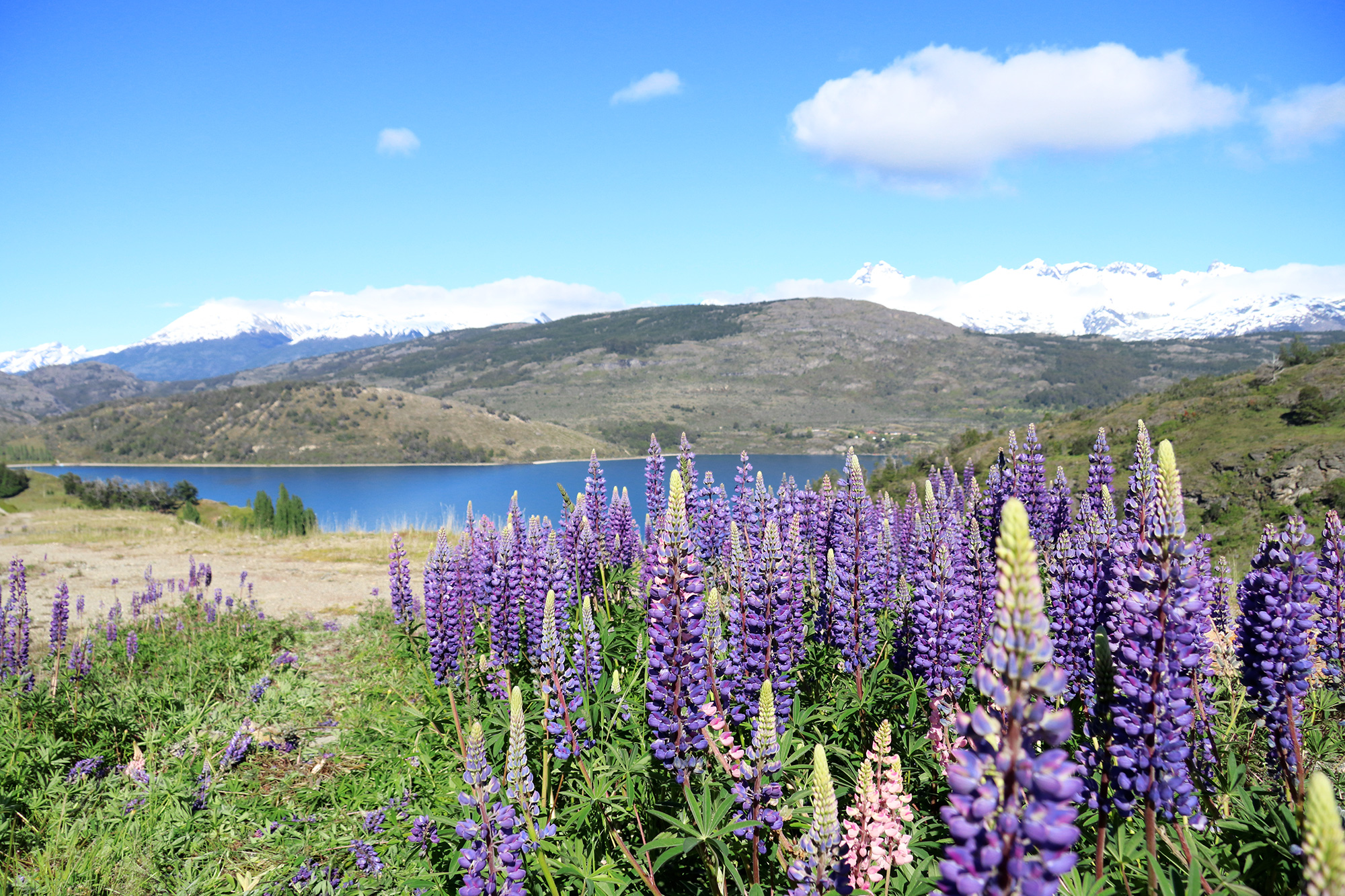 Reisverslag Patagonië - Lago General Carrera