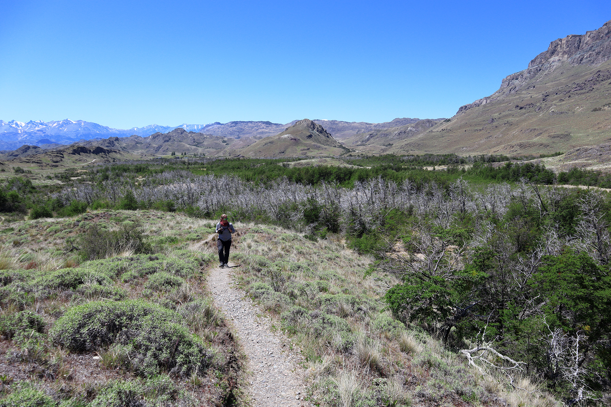 Reisverslag Patagonië - Parque Patagonia - Sendero La Vega