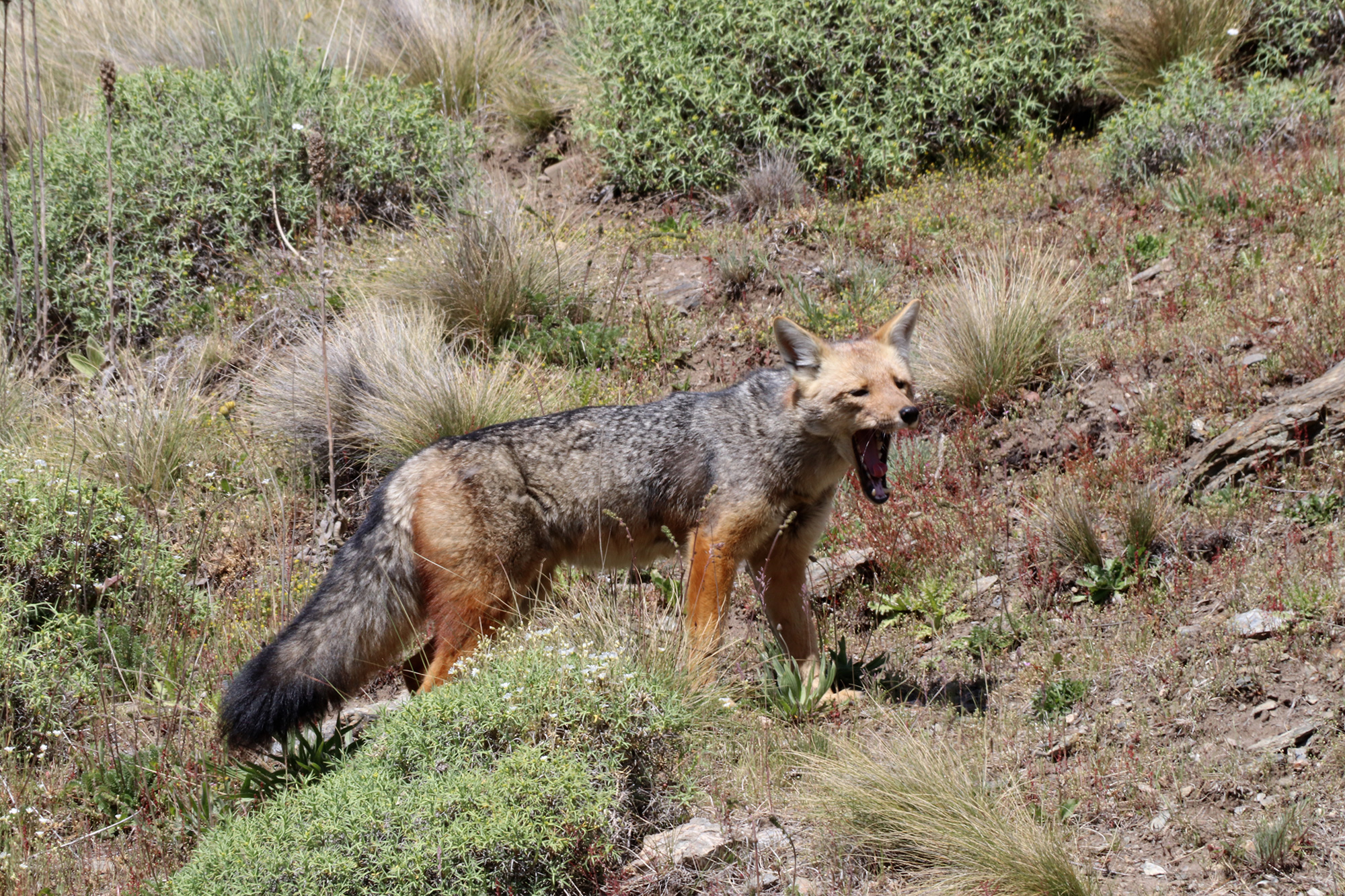 Reisverslag Patagonië - Parque Patagonia