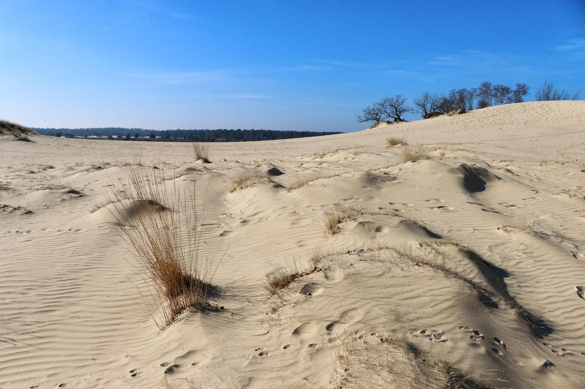 Foto van de maand: Februari 2019 - Nationaal Park De Loonse en Drunense Duinen