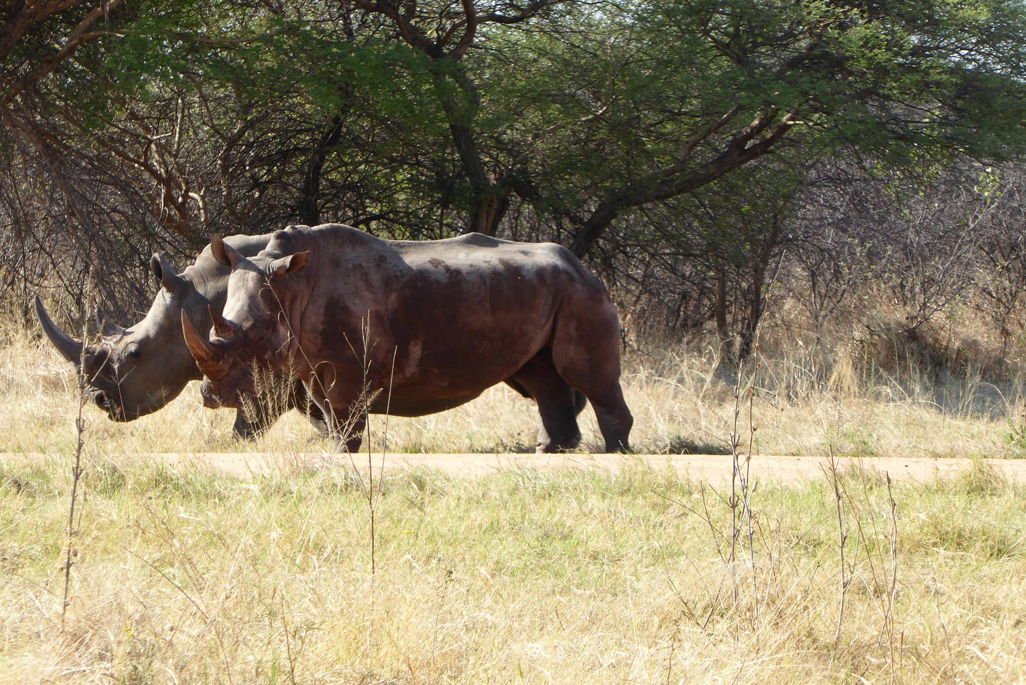 Anika - Namibië - Neushoorns