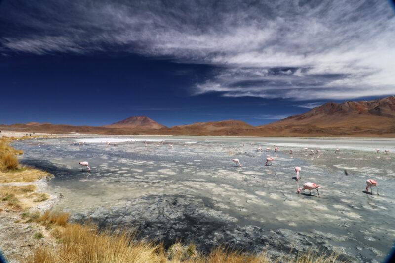 Bolivia in 20 beelden - Laguna Charcota