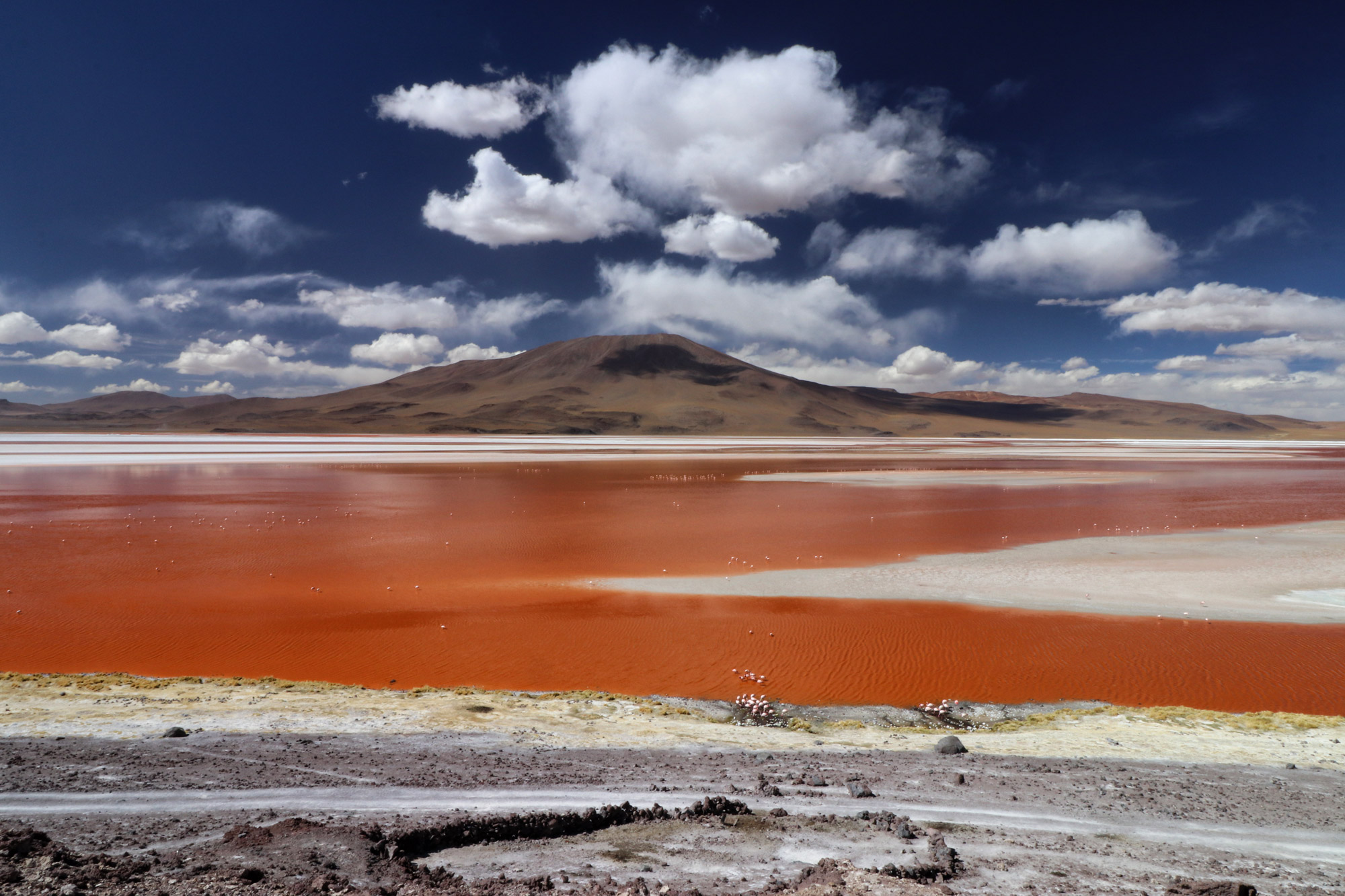 Bolivia in 20 beelden - Laguna Colorada