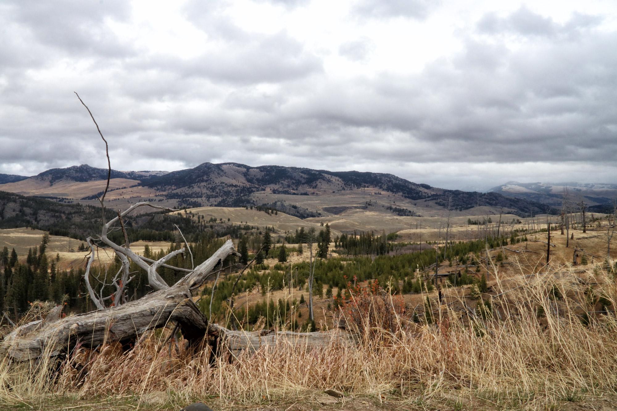 De hoogtepunten van Yellowstone National Park - Lamar Valley