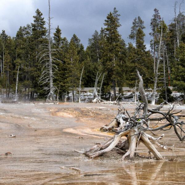 De hoogtepunten van Yellowstone National Park - Lower Geyser Basin