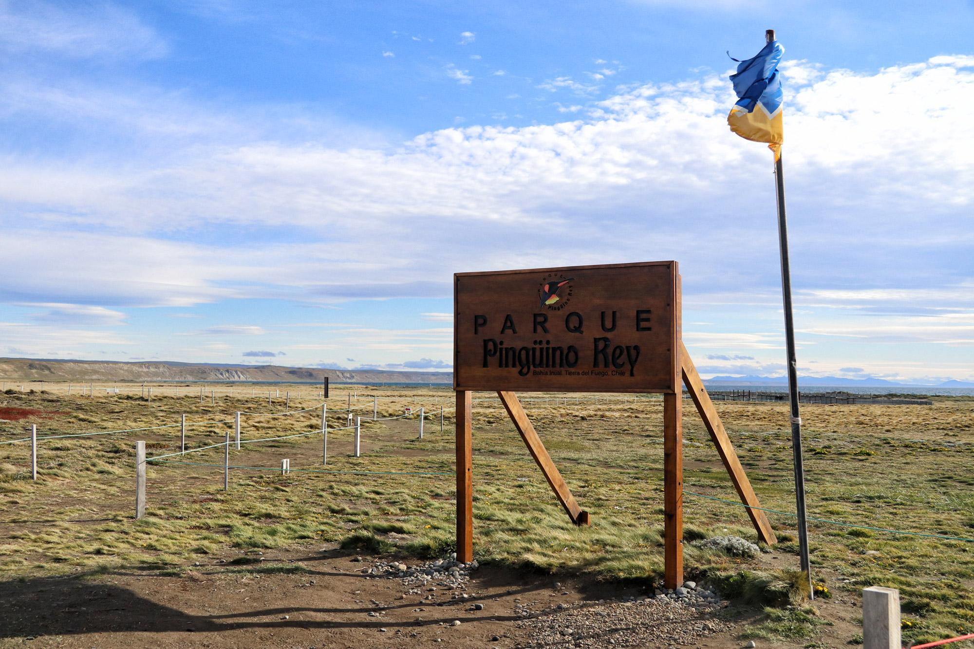 Koningspinguïns spotten op Tierra del Fuego