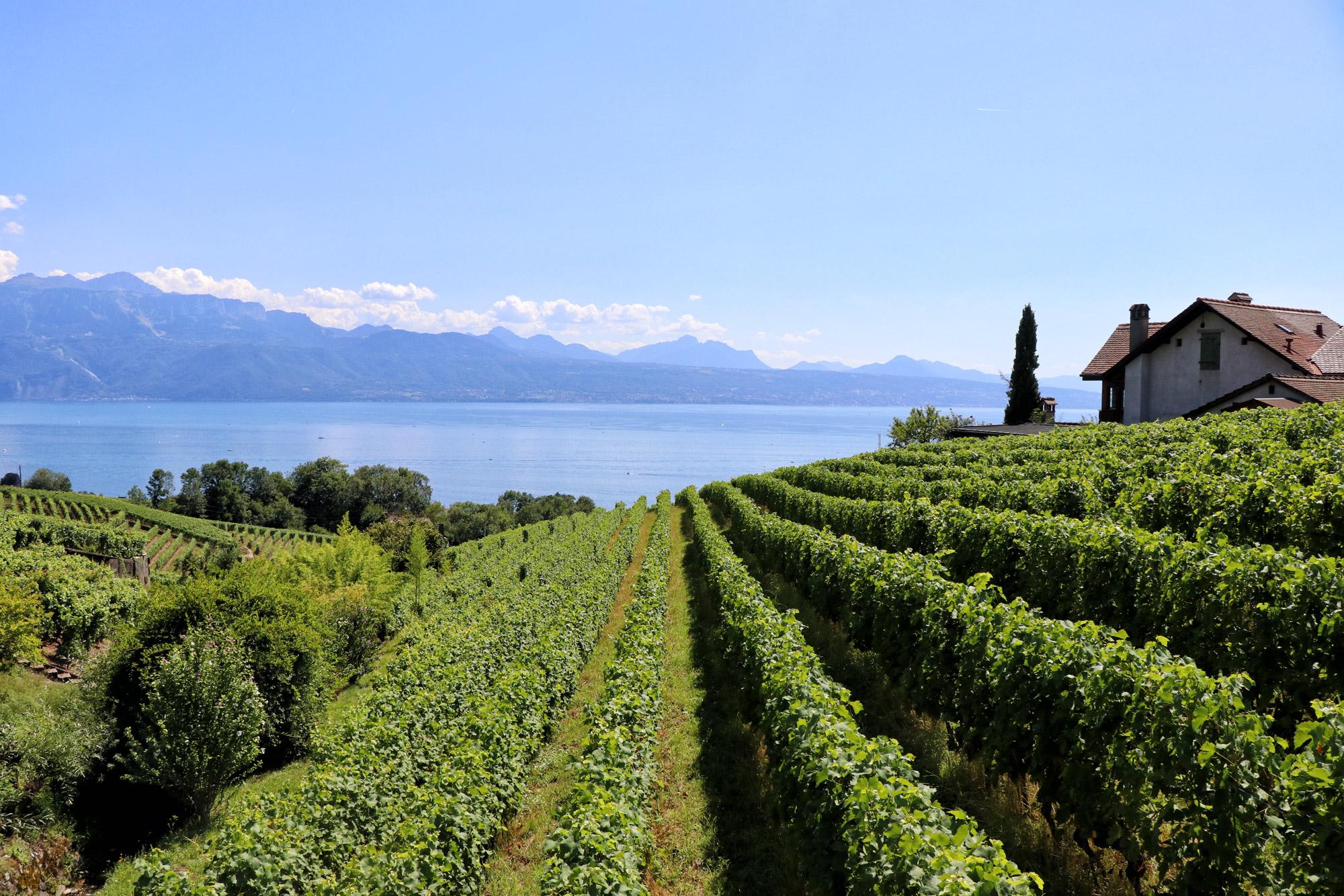 Zwitserland - Wijnbergterrassen van Lavaux