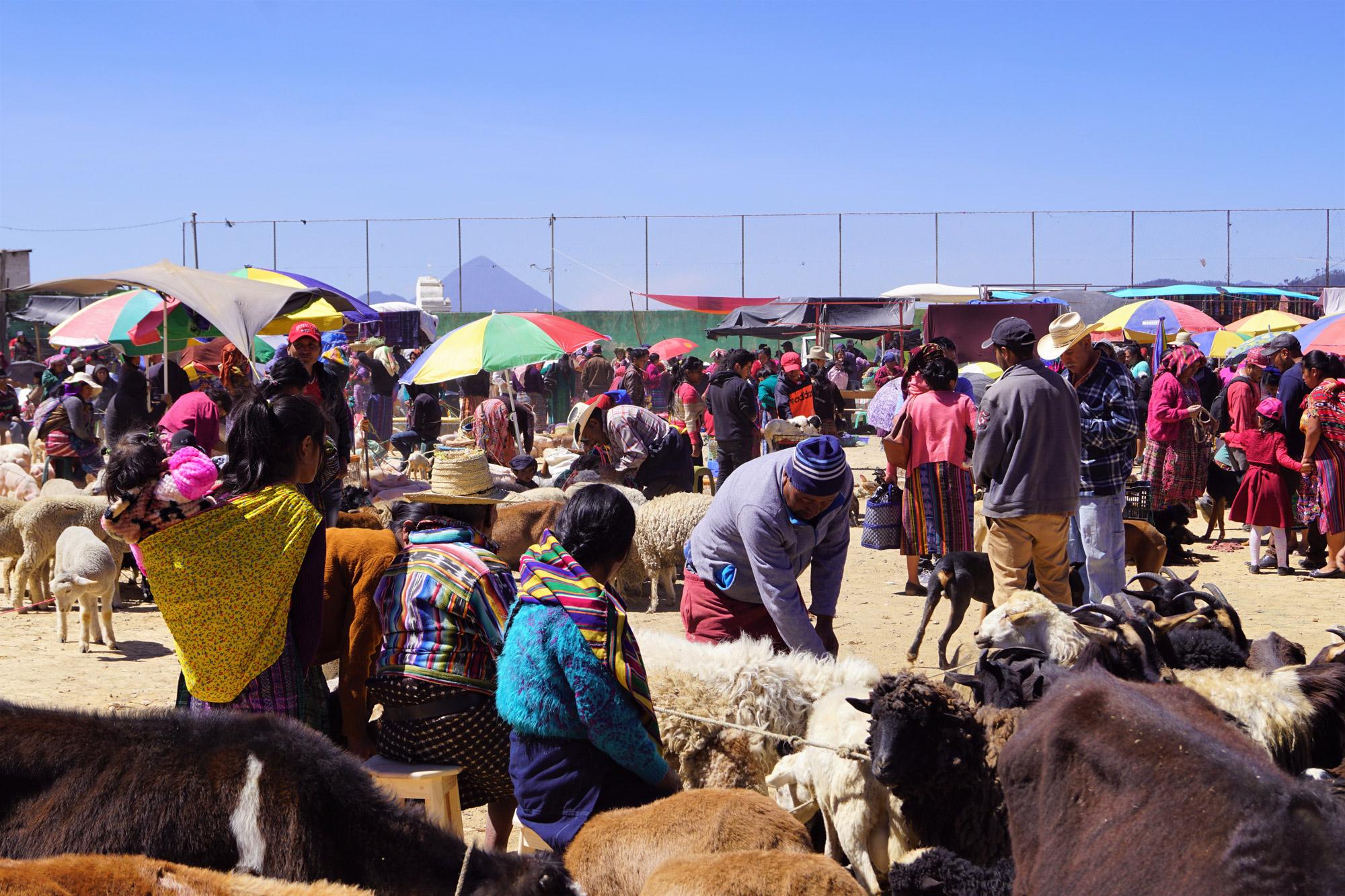 Michelle - Markt in San Francisco El Alto