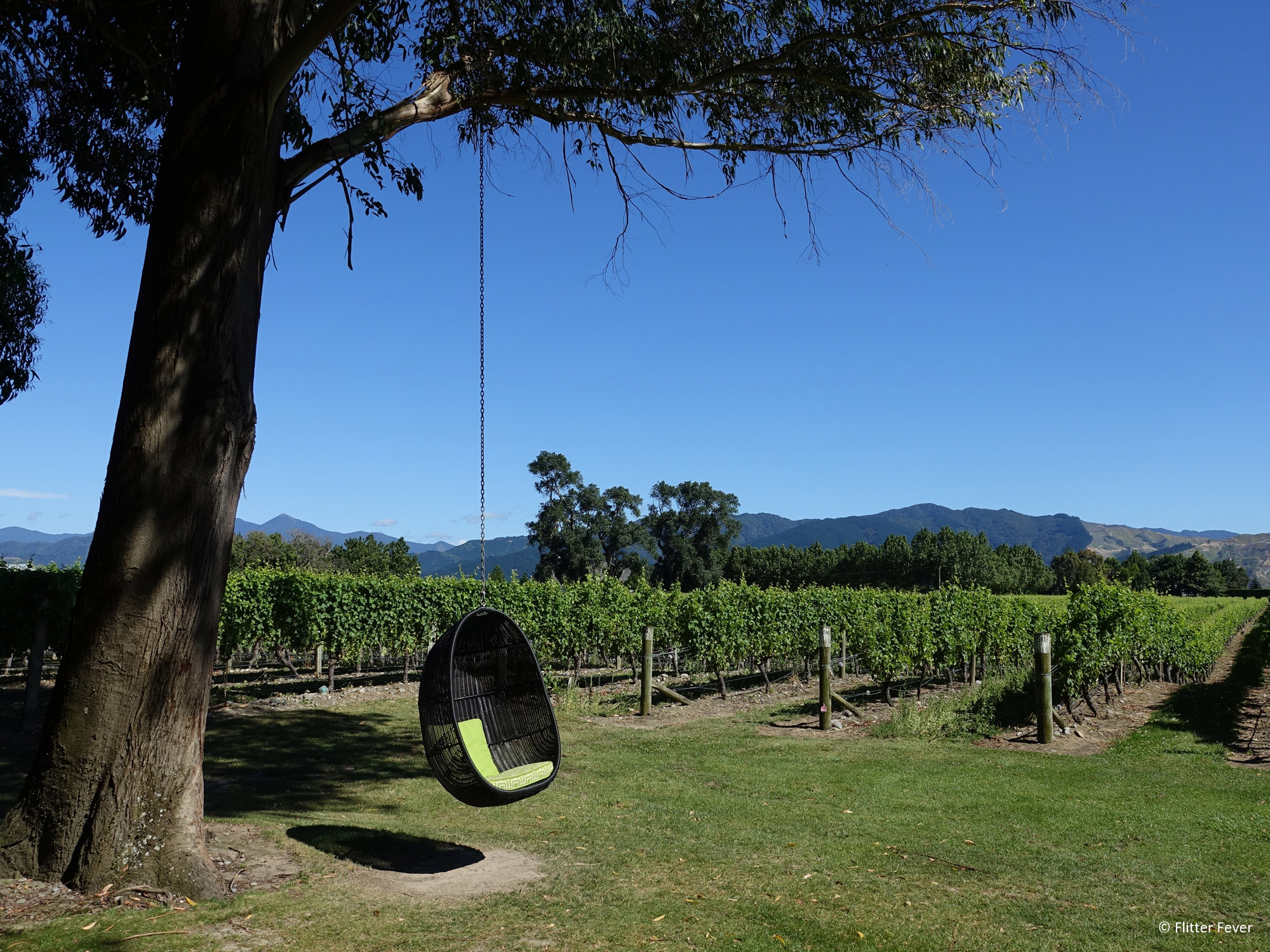 Flitter Fever - Cloudy Bay vineyard Blenheim in Nieuw-Zeeland