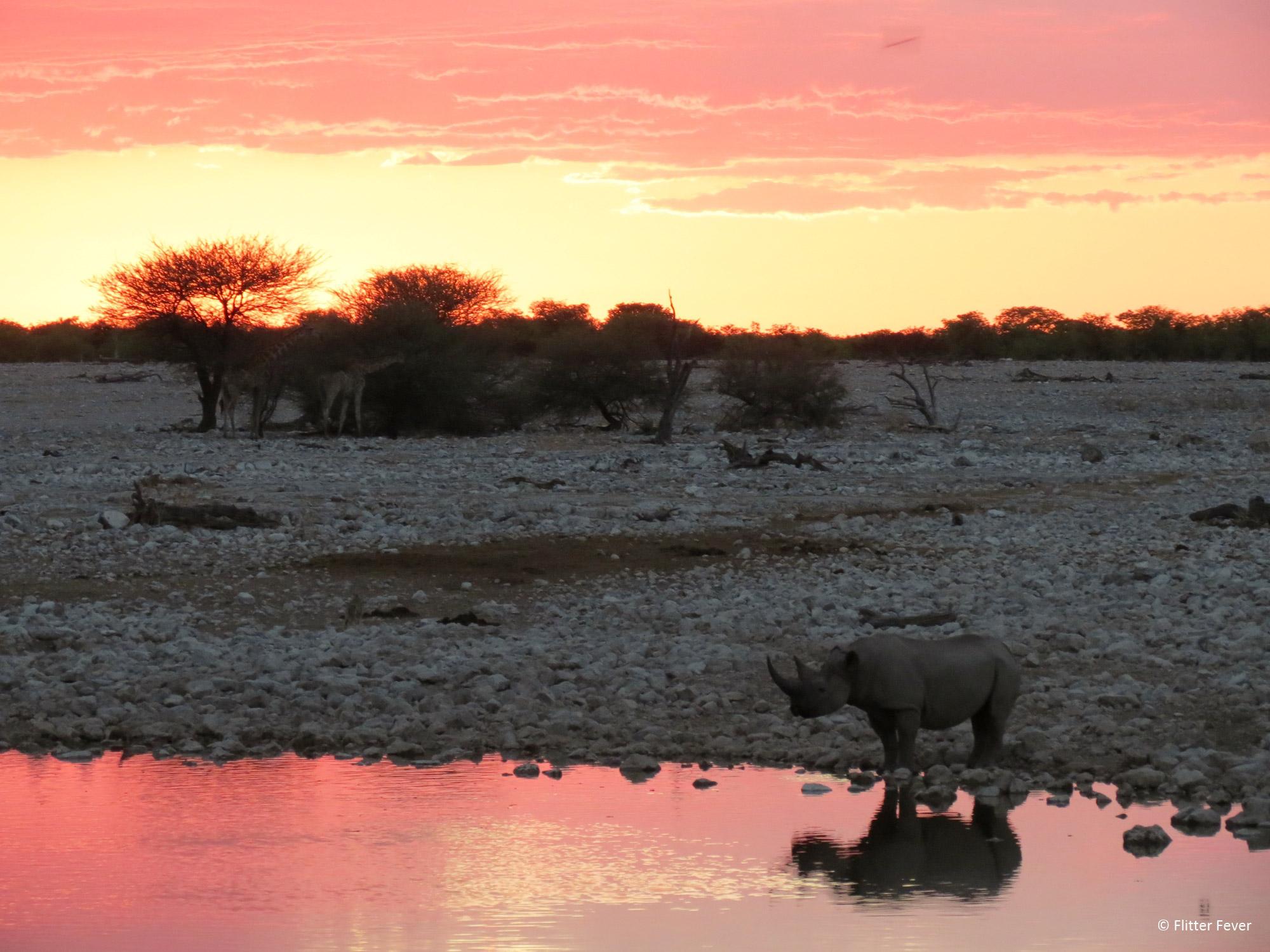 Flitter Fever - Zonsondergang in Etosha National Park in Namibië