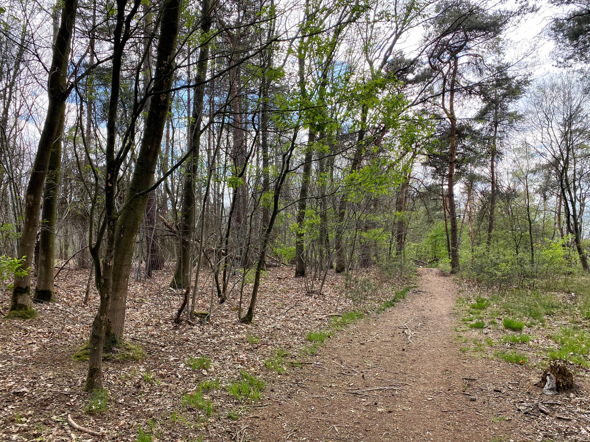 Heide en vennen route in Geldrop - Braakhuizense Heide