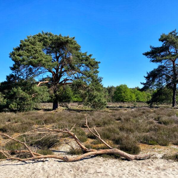 Heide en vennen route in Geldrop - Coeveringse Heide