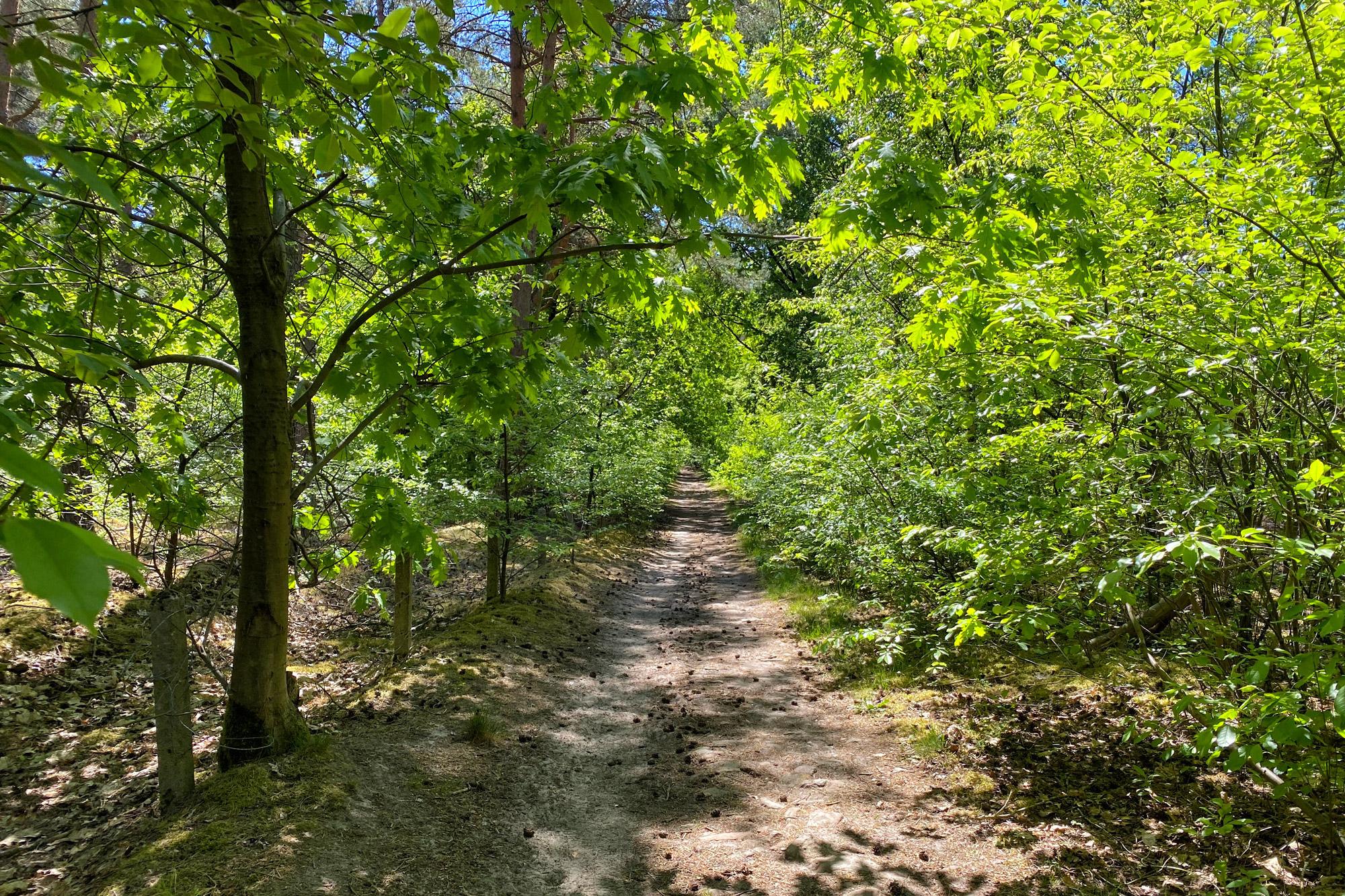 Heide en vennen route in Geldrop - Tussen Mierlo en Strabrechtse Heide