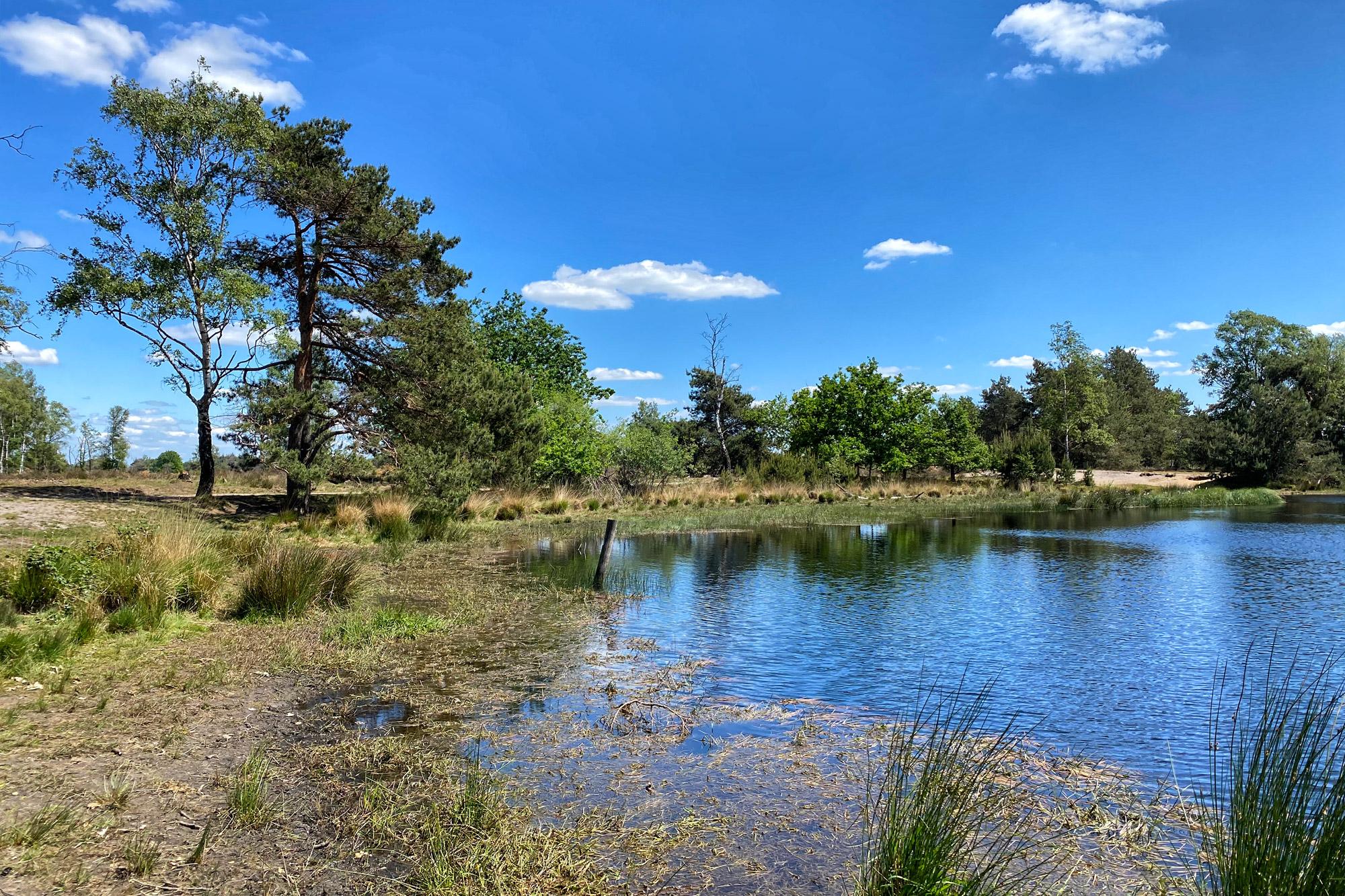 Heide en vennen route in Geldrop - Strabrechtse Heide, Kiezelven