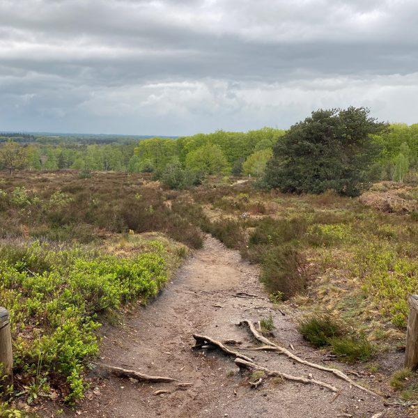 Wandeling: Rollende Heuvels, Sallandse Heuvelrug