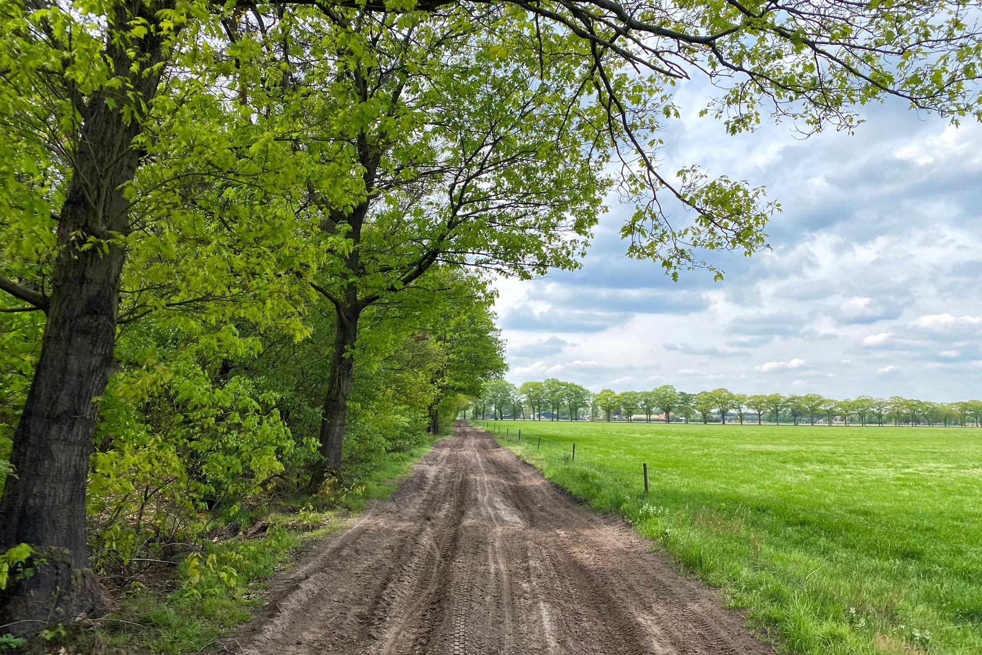 Wandeling: Oirschotse Heide