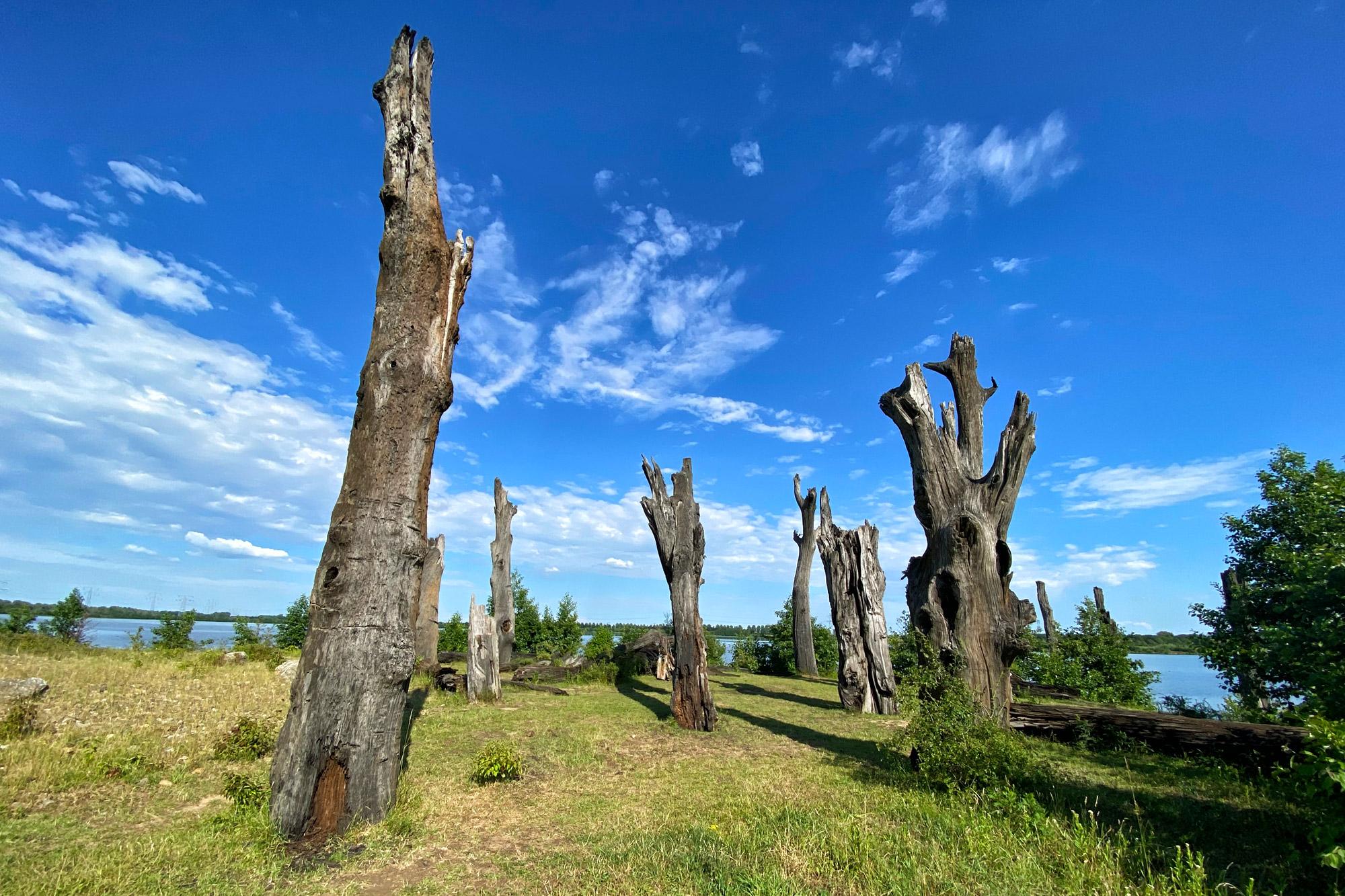 Foto van de maand juni 2020 - Bomenmonument