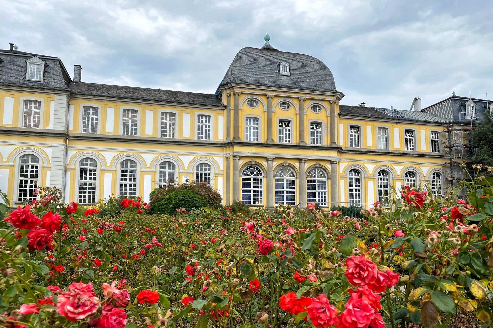 Foto van de maand: Augustus 2020 - Bonn, Duitsland