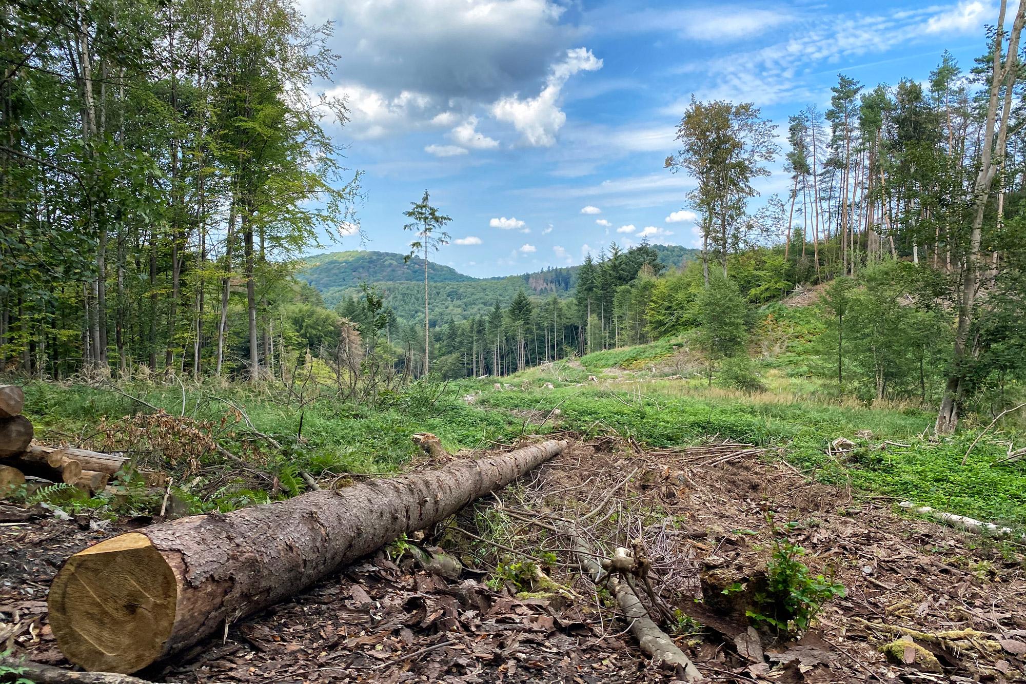 Foto van de maand: Augustus 2020 - Siebengebirge, Duitsland
