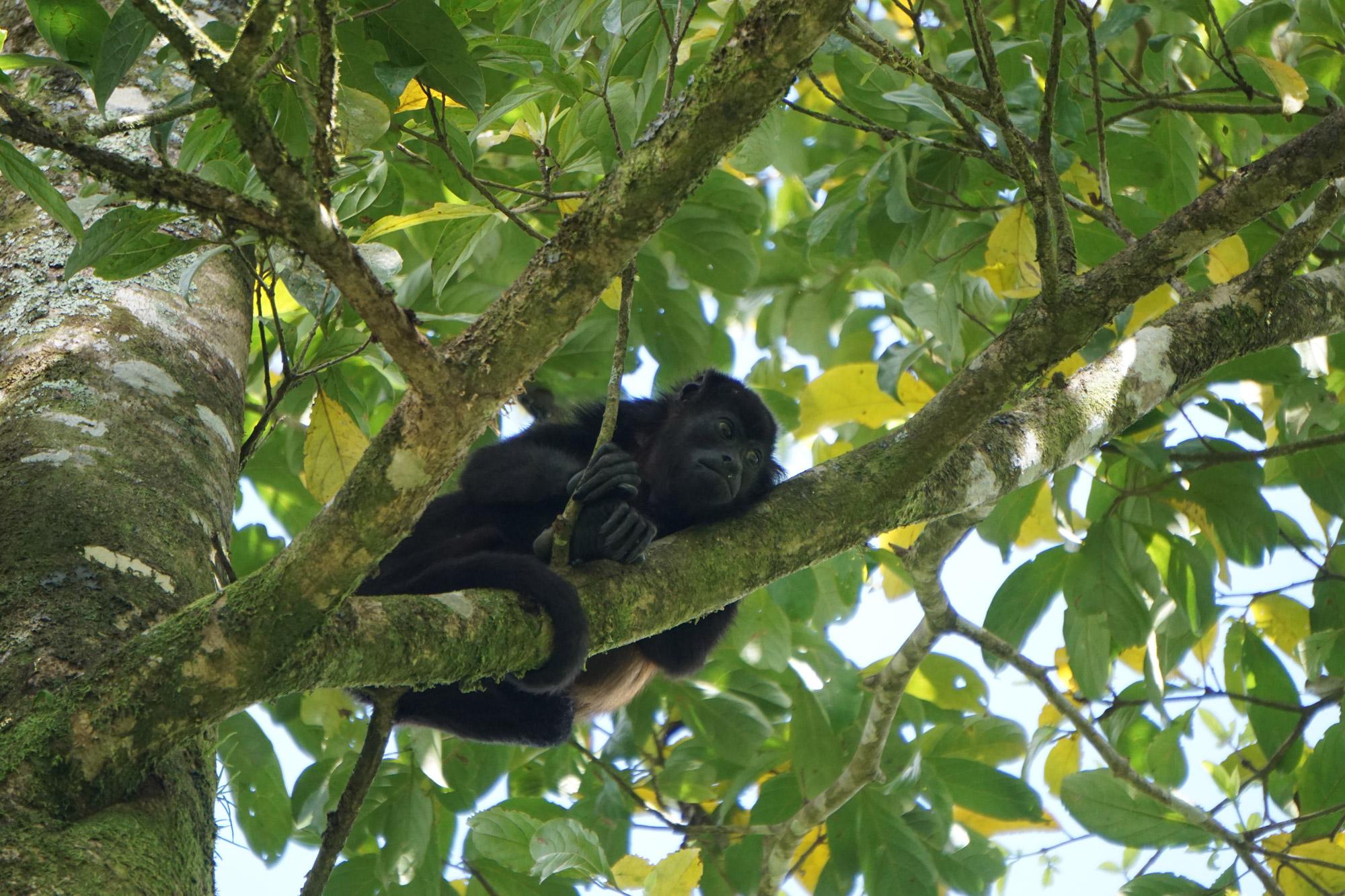 Anouk - Brulaap in Costa Rica