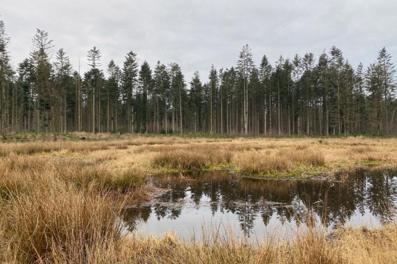 Wandelen in Noord-Brabant: Stiphoutse Bossen en langs de Goorloop