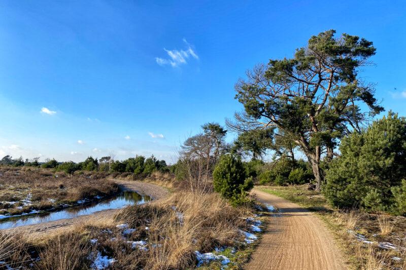 Wandeling: Winterse wandeling over de Strabrechtse Heide