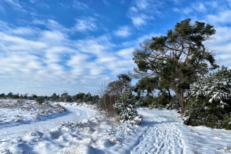 Wandeling: Winterse wandeling over de Strabrechtse Heide in de sneeuw