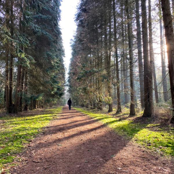 Wandelen in Noord-Brabant: De Stippelberg
